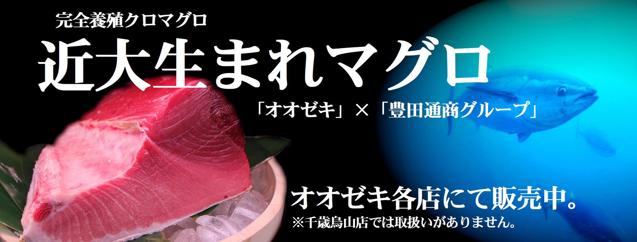 近大生まれマグロ【完成版①】.JPG
